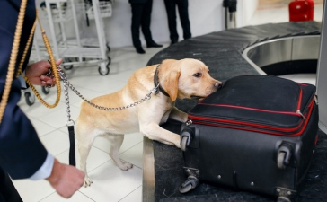 How To Prevent Crimes In Airports