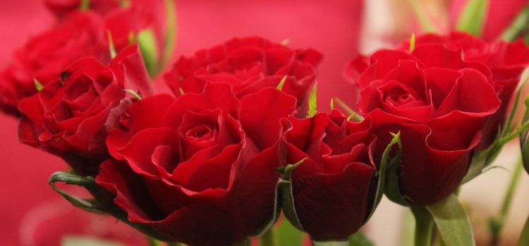 The Flower Carries The Love Along With It When You Send Them